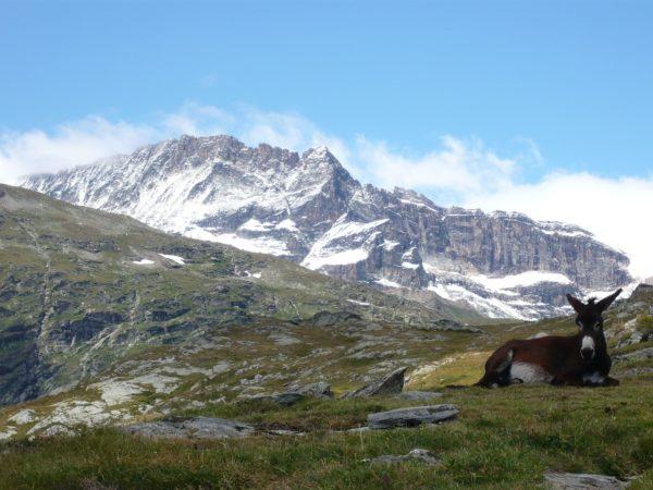 Les délices de la Savoie avec une randonnée au Lac Blanc !